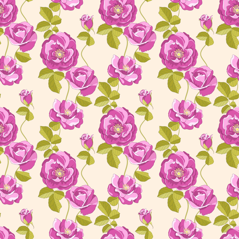 バラの花の画像・イラスト『壁紙・背景用』/無料のフリー素材集【百花