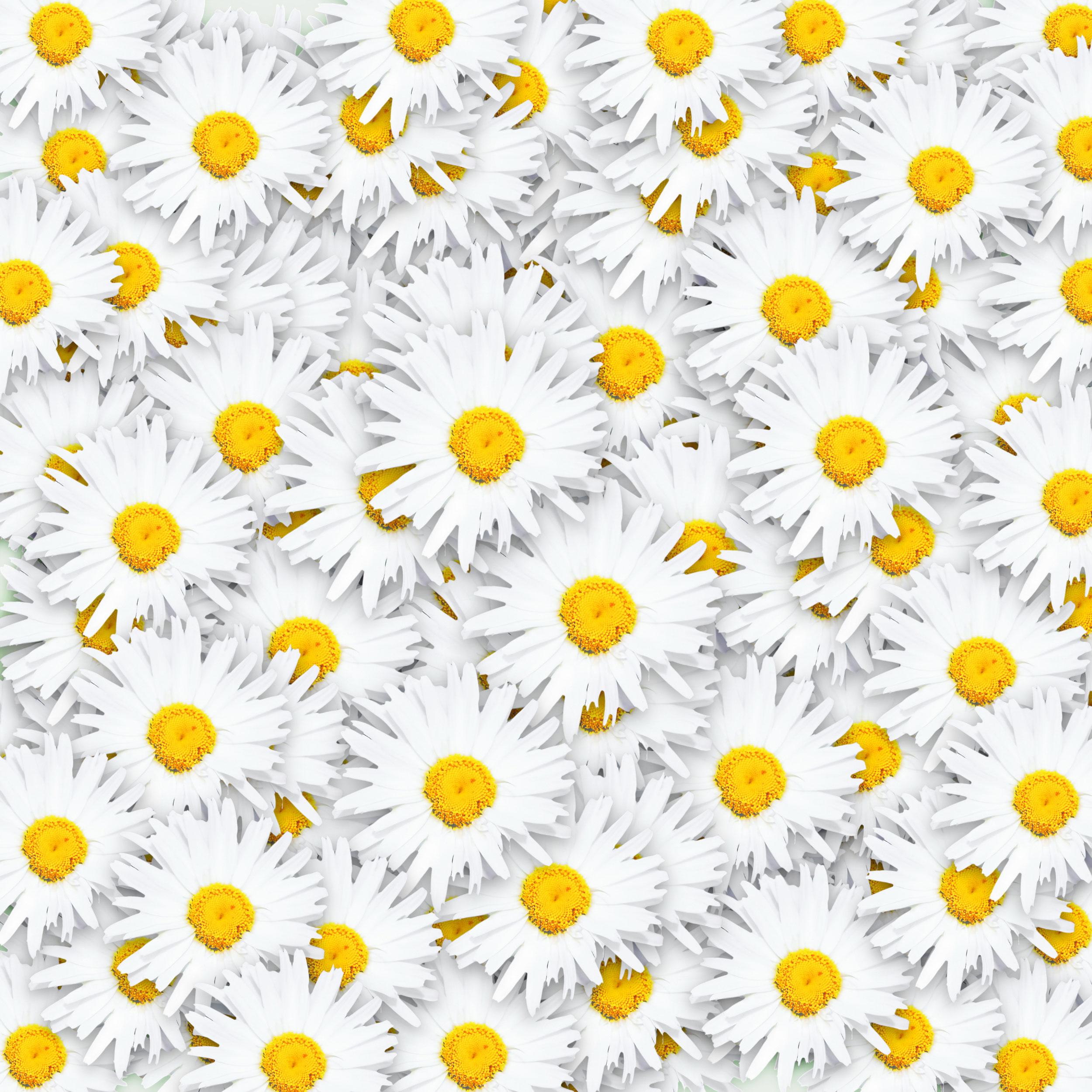 白いの花のイラスト・フリー素材/背景・壁紙no.340『一面の花・白黄』