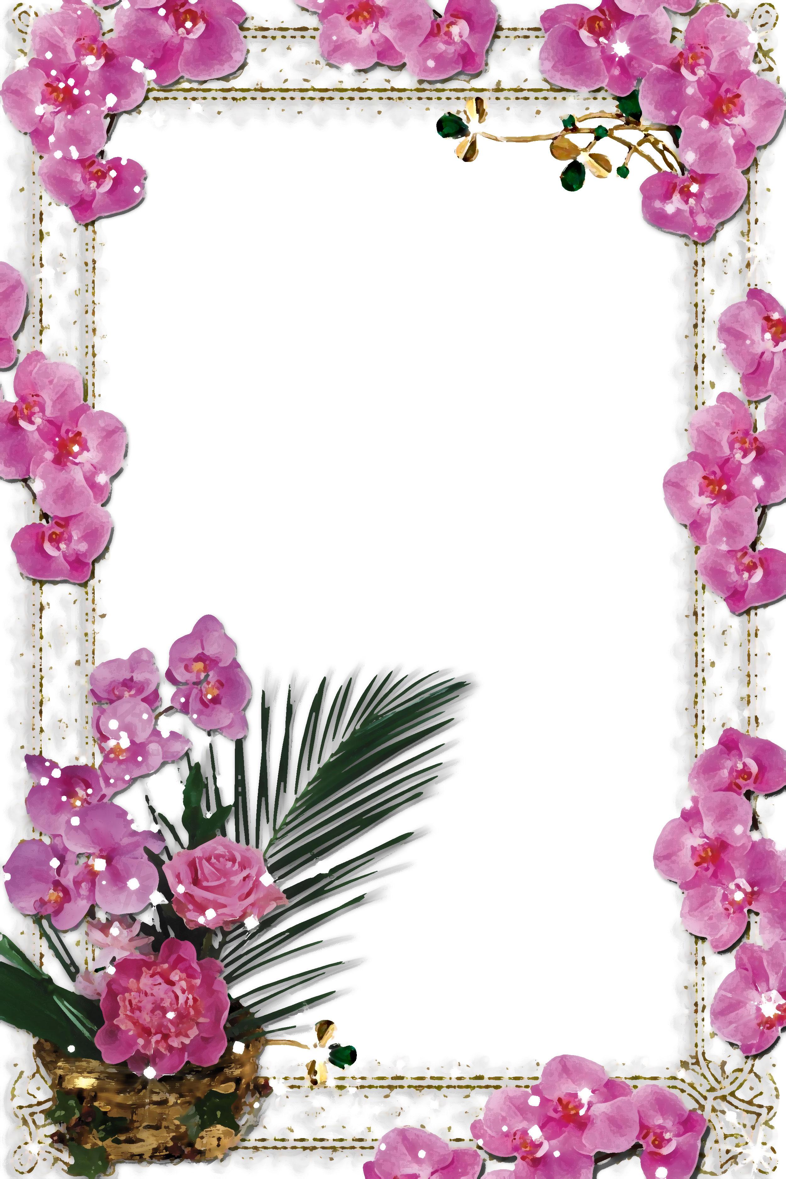 胡蝶蘭の画像イラストフリー素材no071胡蝶蘭の壁紙背景