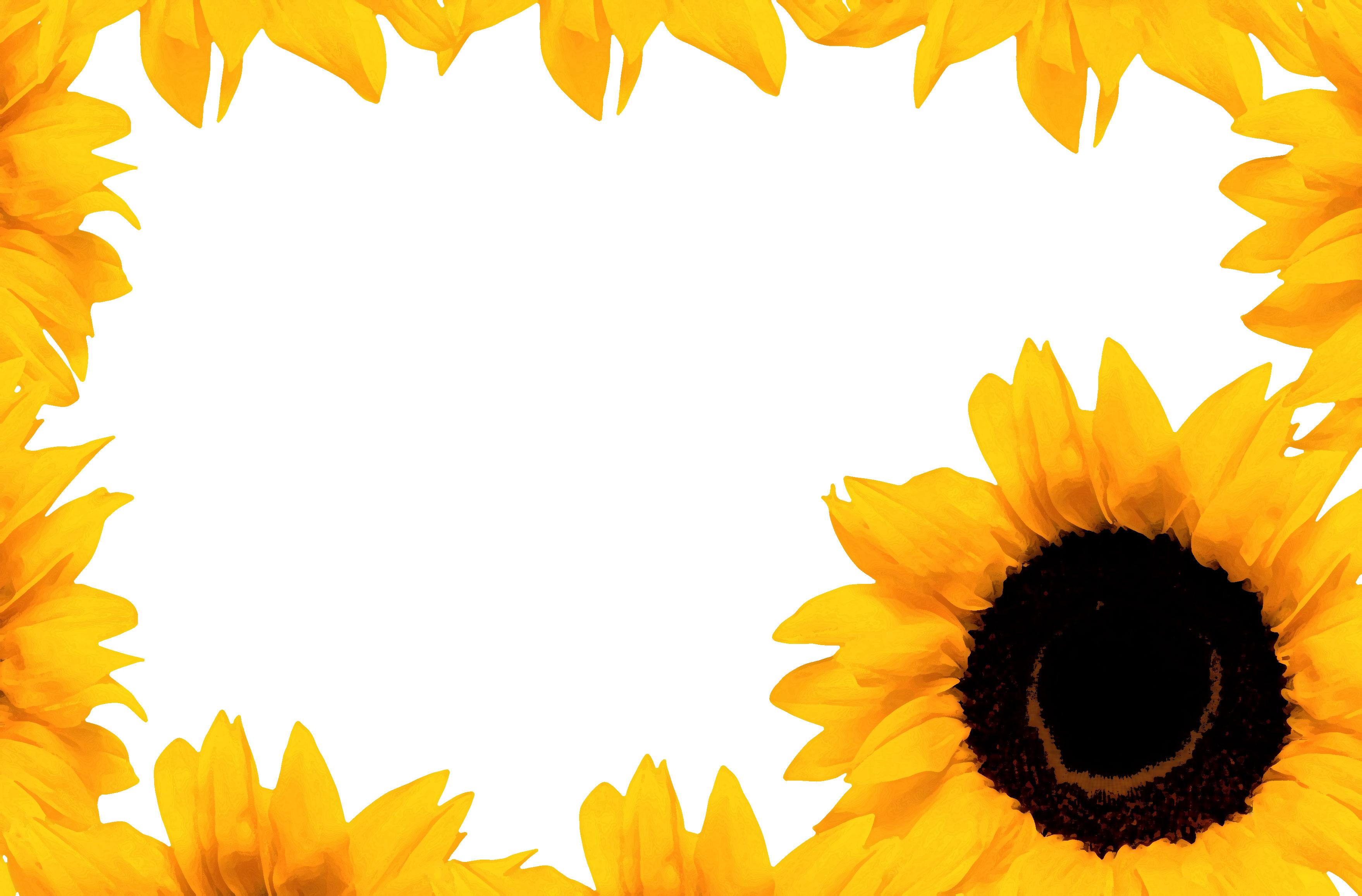 壁紙・背景イラスト/花のフレーム・外枠 no.163『ひまわり・花囲い』