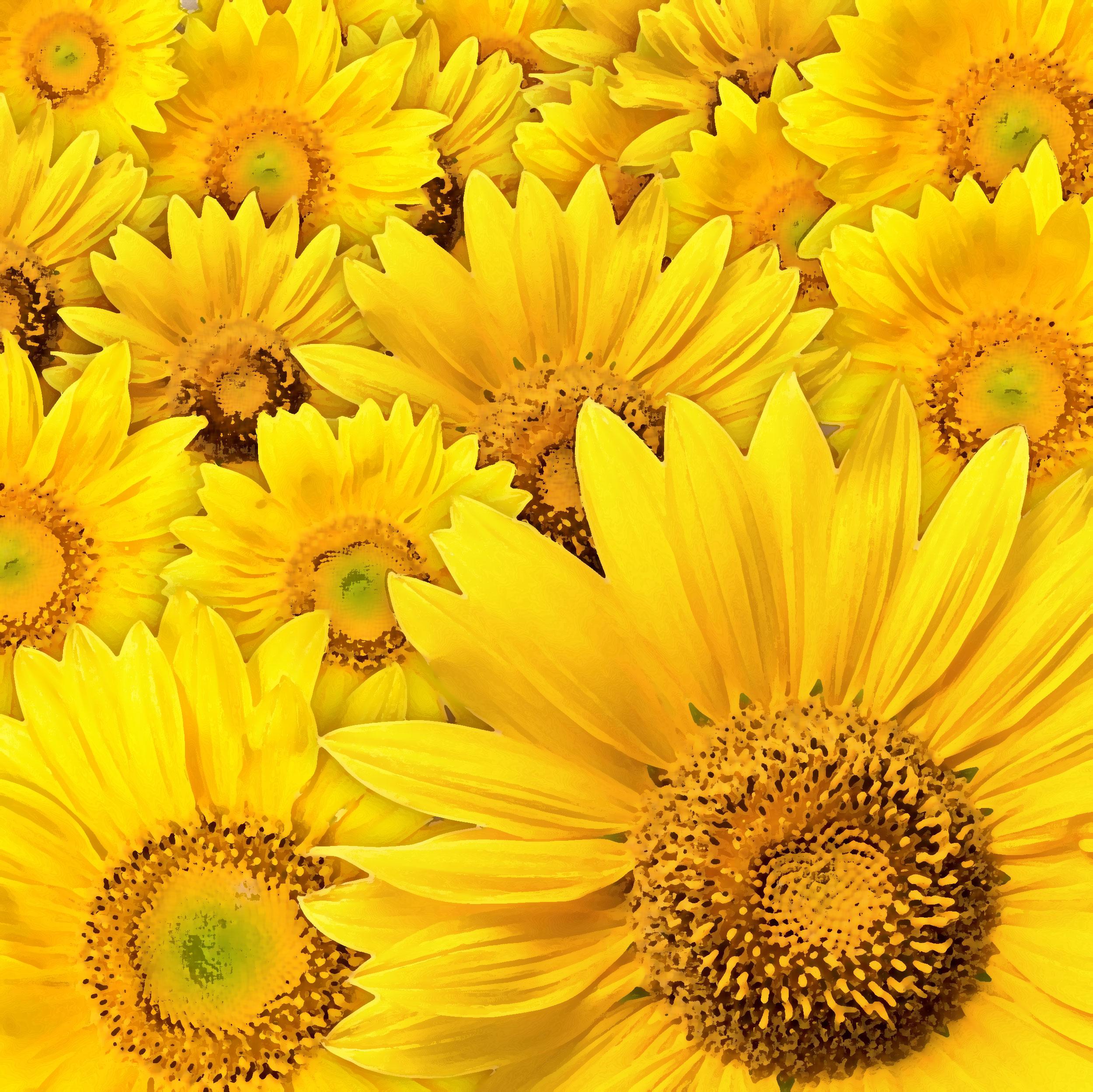 https://flowerillust.com/img/flower/flower-back0579.jpg