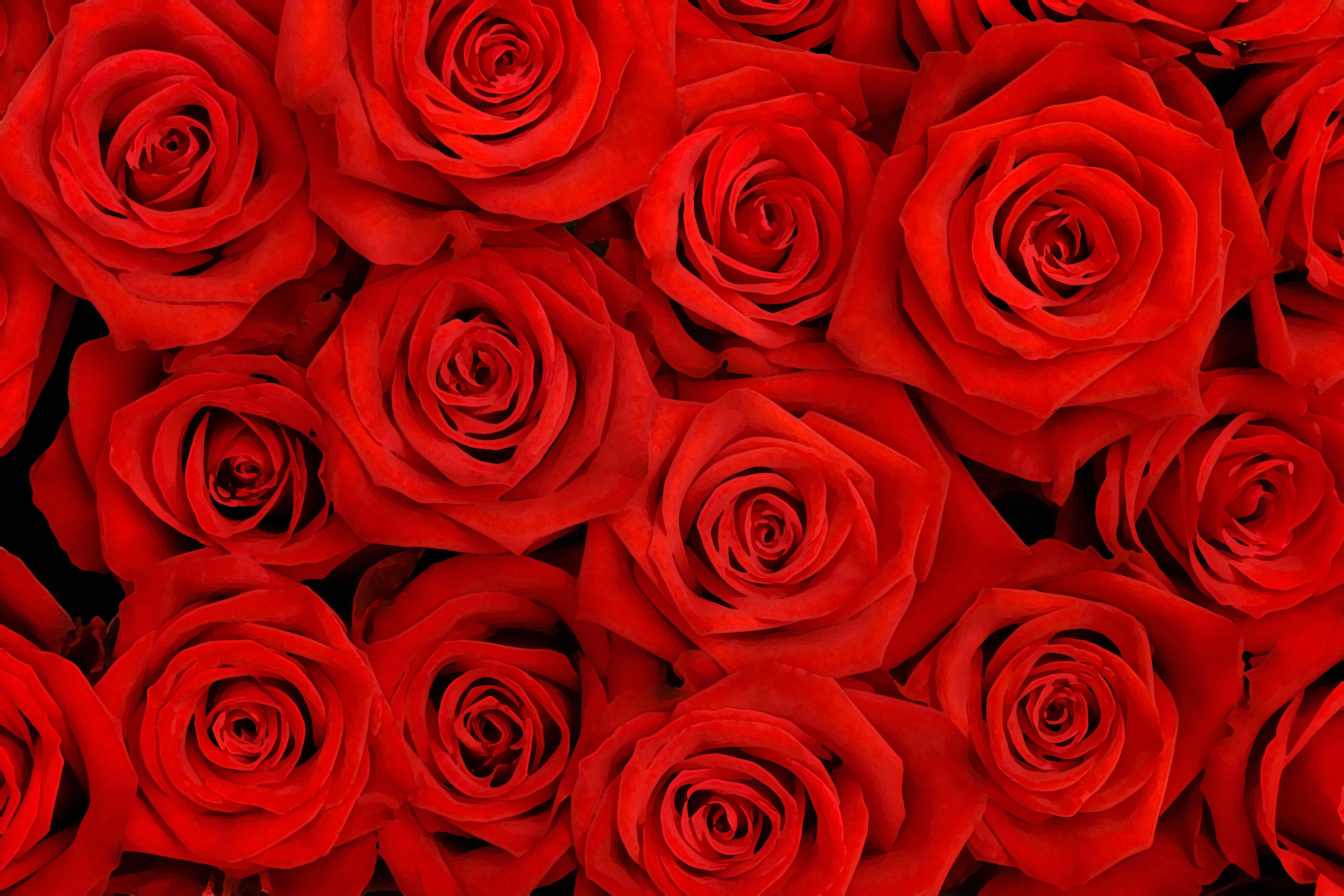 https://flowerillust.com/img/flower/flower-back0991.jpg