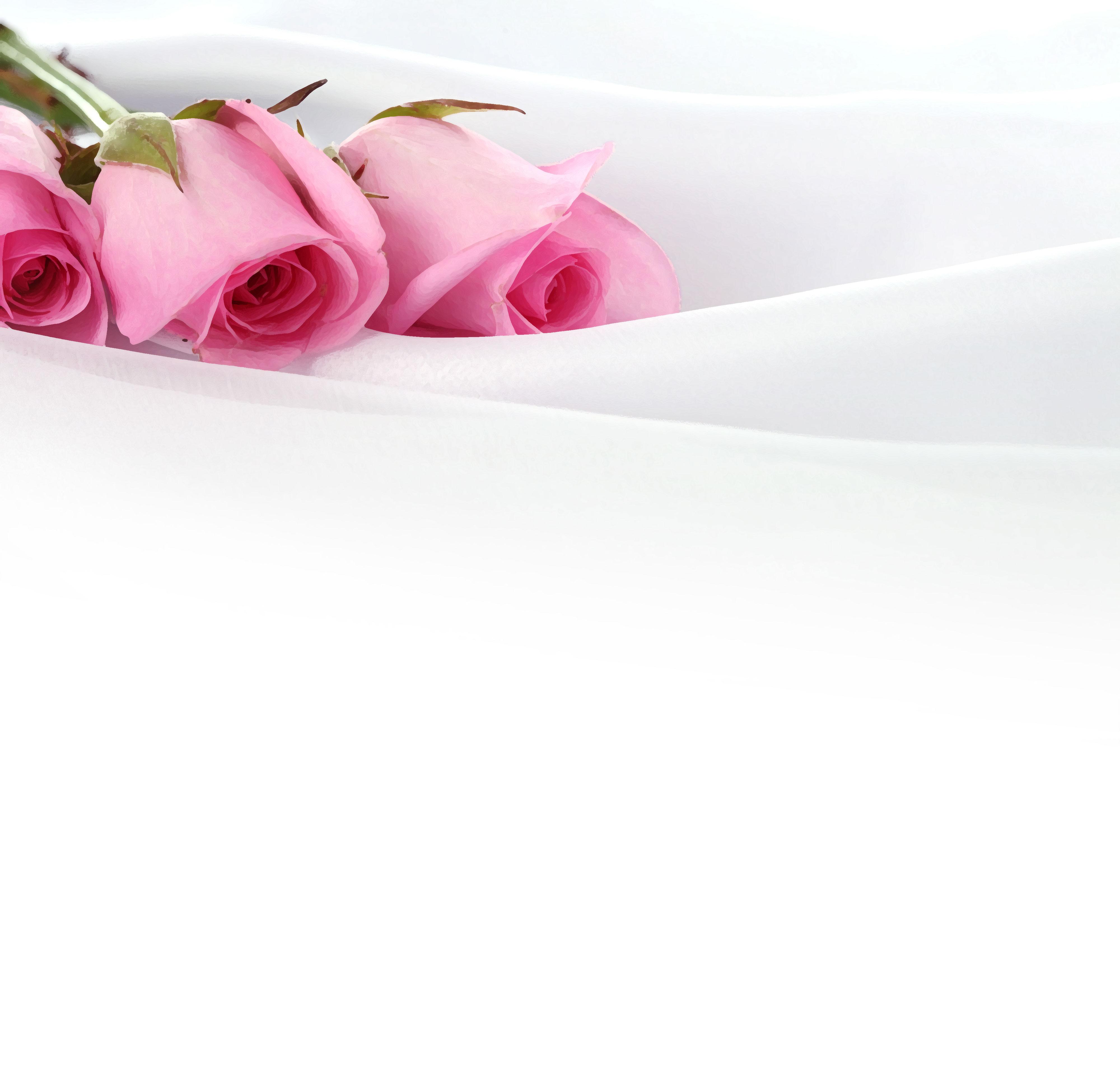 花のイラスト・フリー素材/壁紙・背景no.372『ピンクのバラ・白生地』