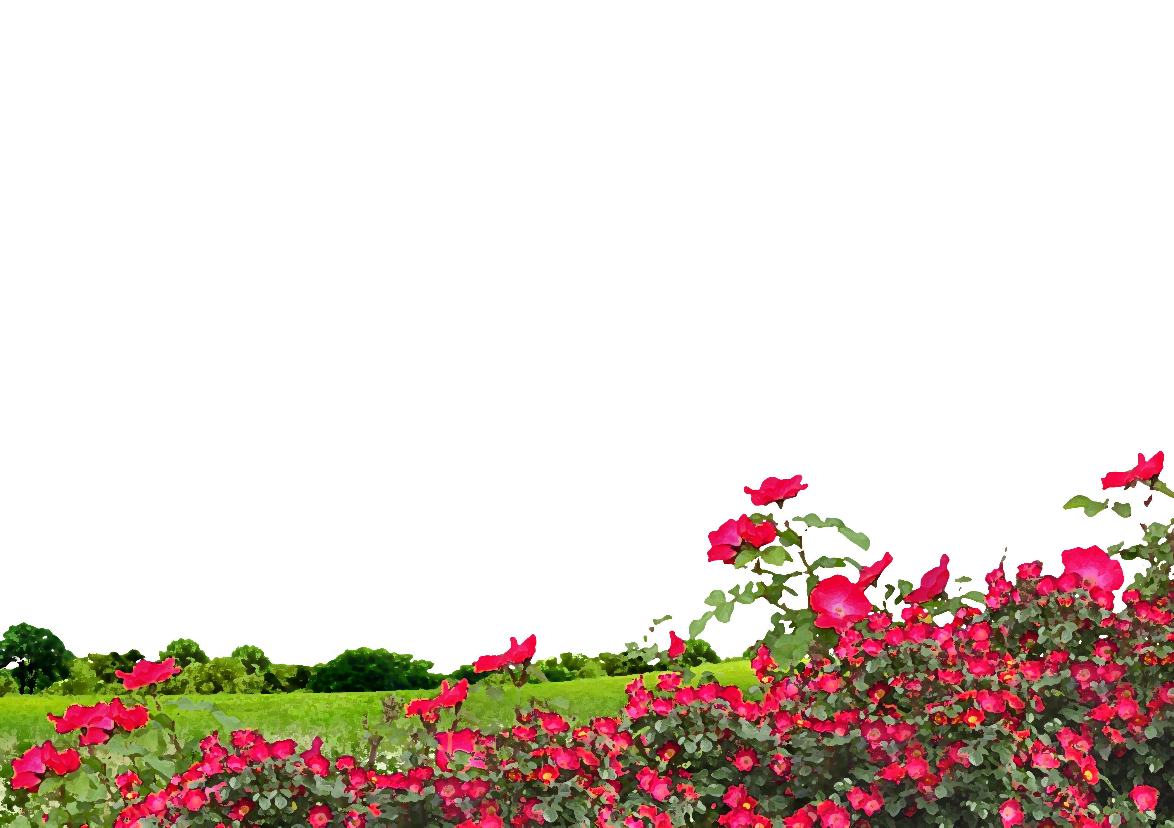 赤い花のイラストフリー素材背景壁紙no1013草原花畑空