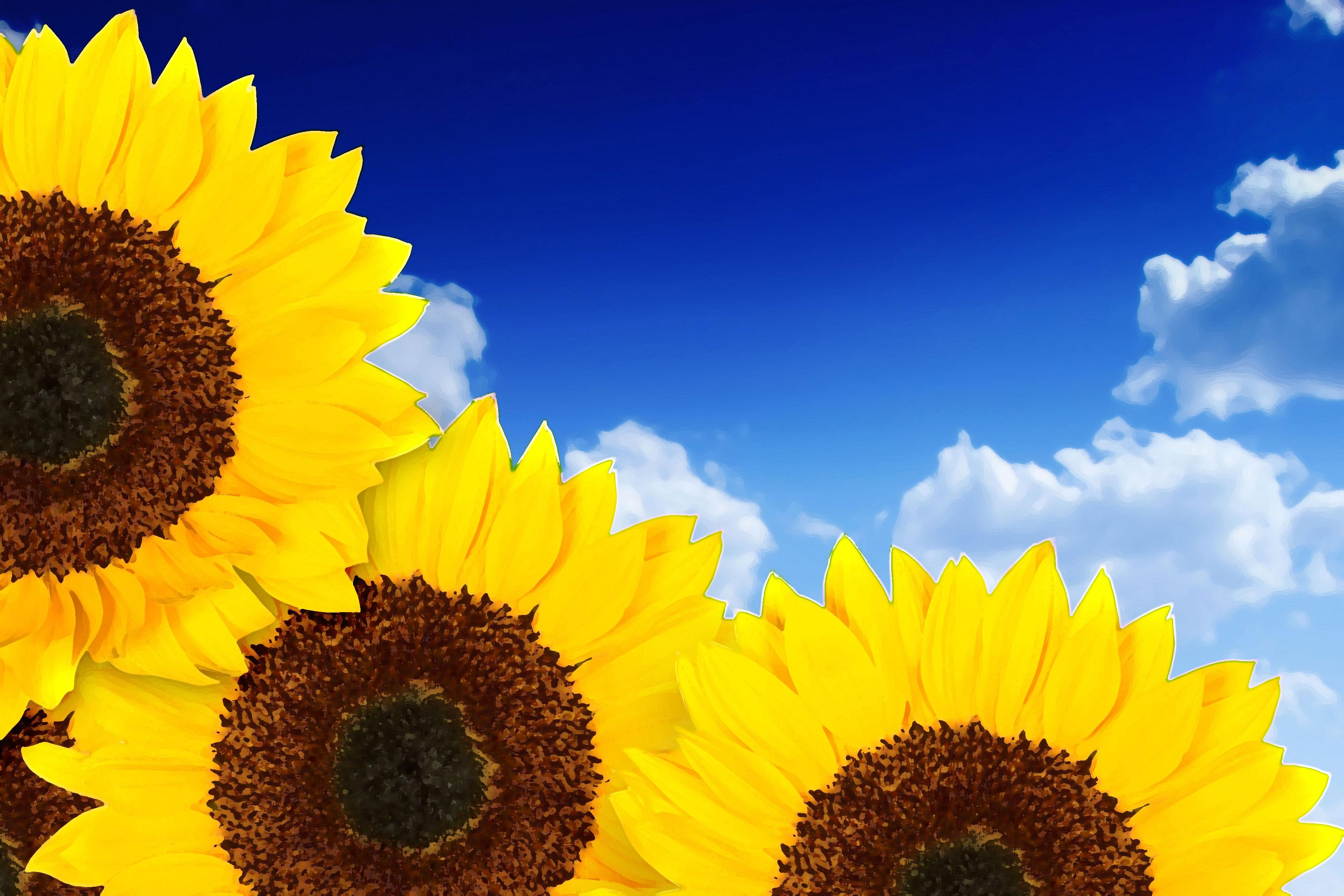 黄色の花のイラスト フリー素材 背景 壁紙no 319 ひまわり 青空 雲