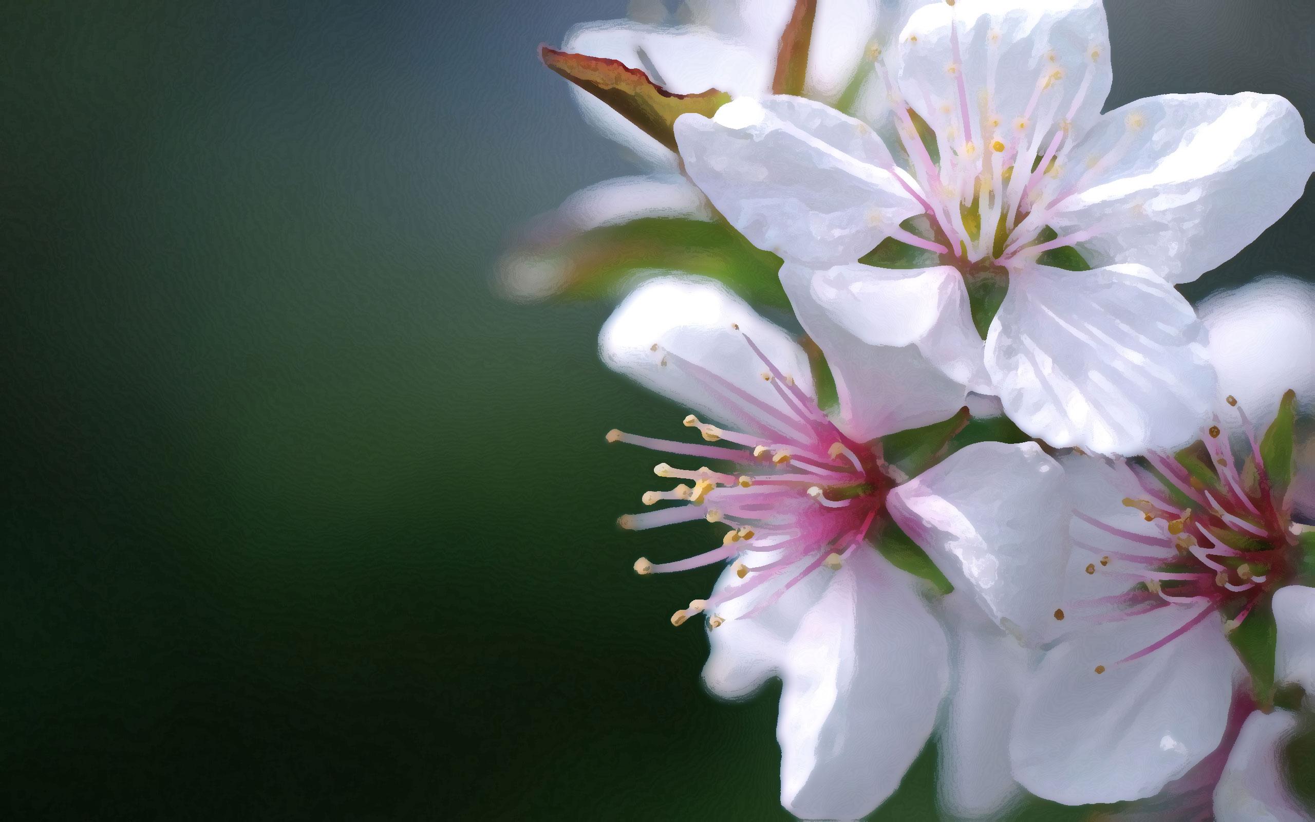 サクラのイラスト見本-桜壁紙・白い花びら
