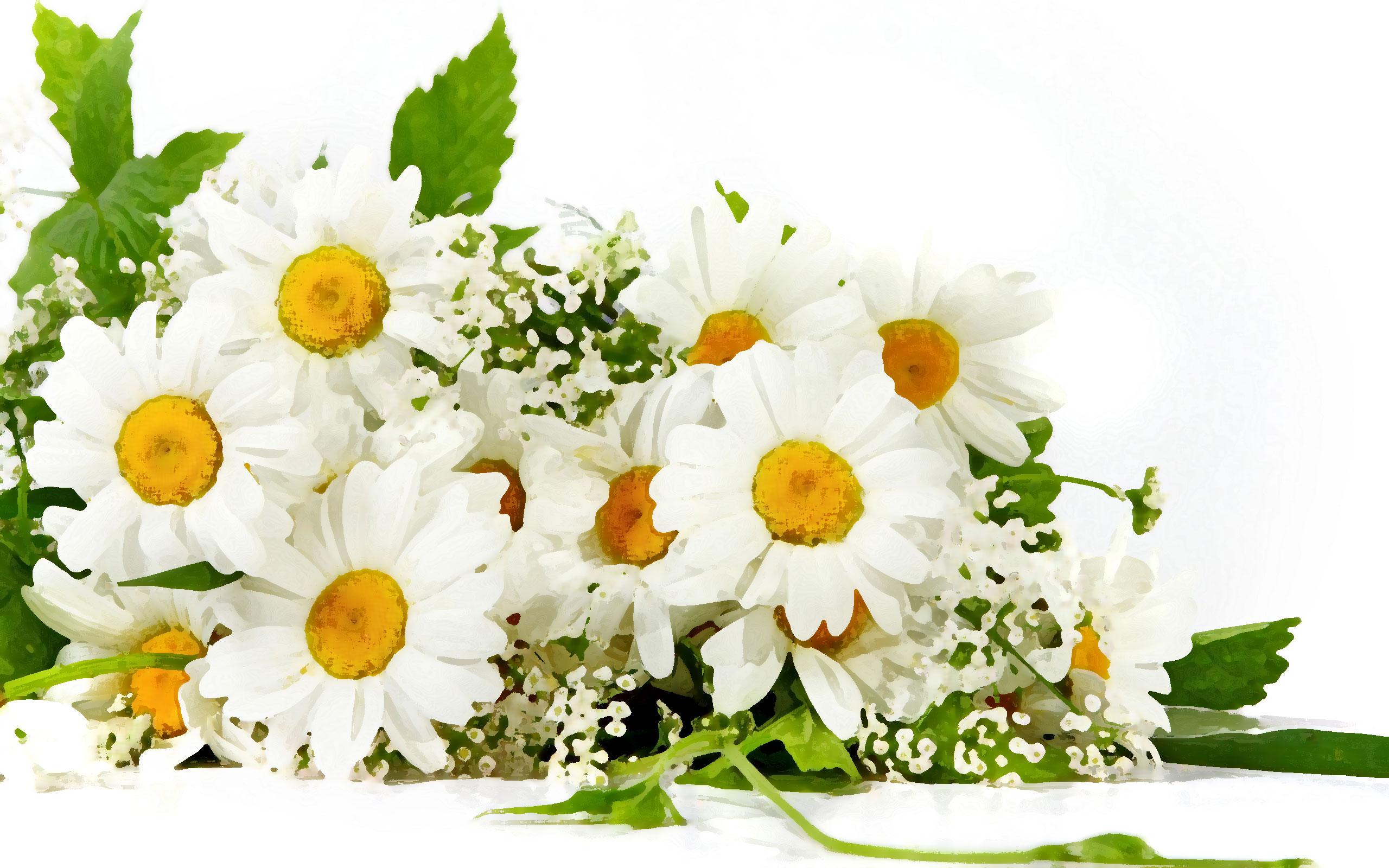 白いの花のイラスト・フリー素材/背景・壁紙no.459『白い花・束』