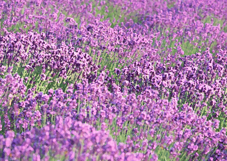 花のイラストフリー素材壁紙背景no458ラベンダー畑