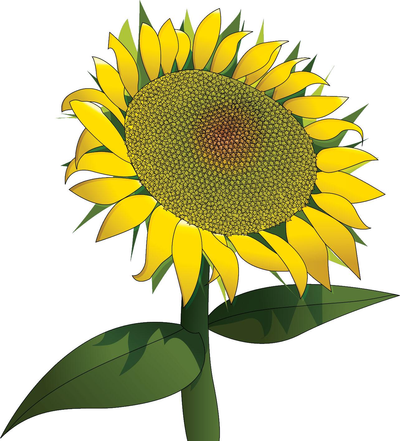 花のイラストデザイン,向日葵
