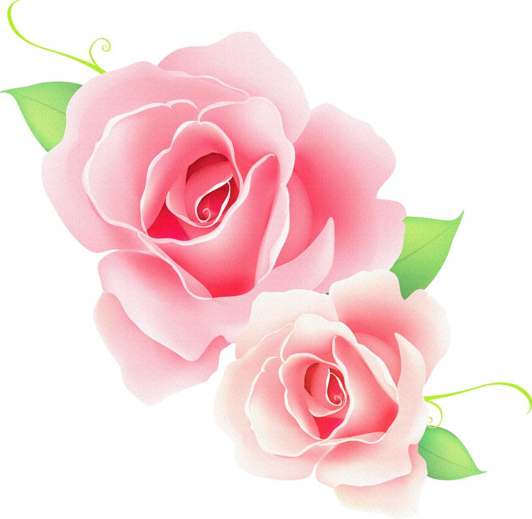 フリー素材_花画像サンプル,ピンクの薔薇