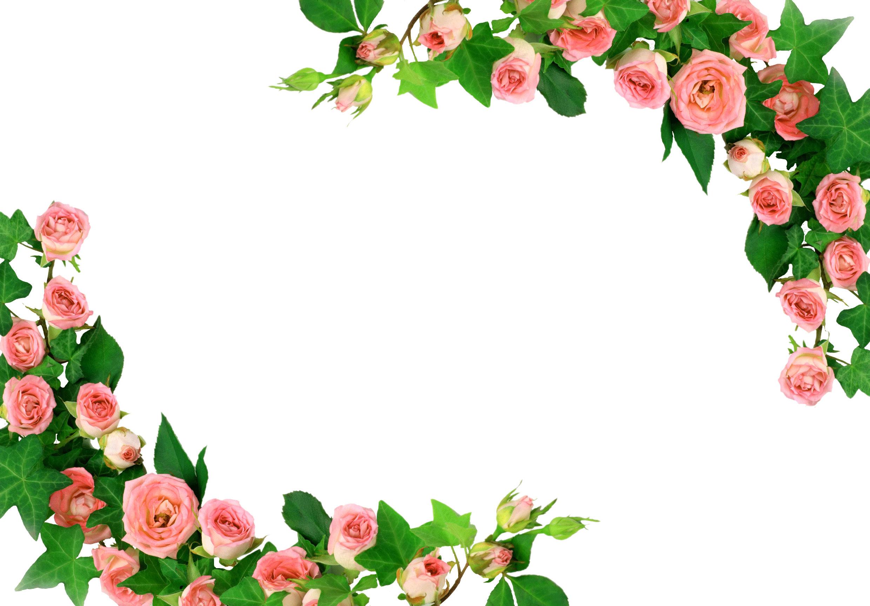 バラの画像 p1_2