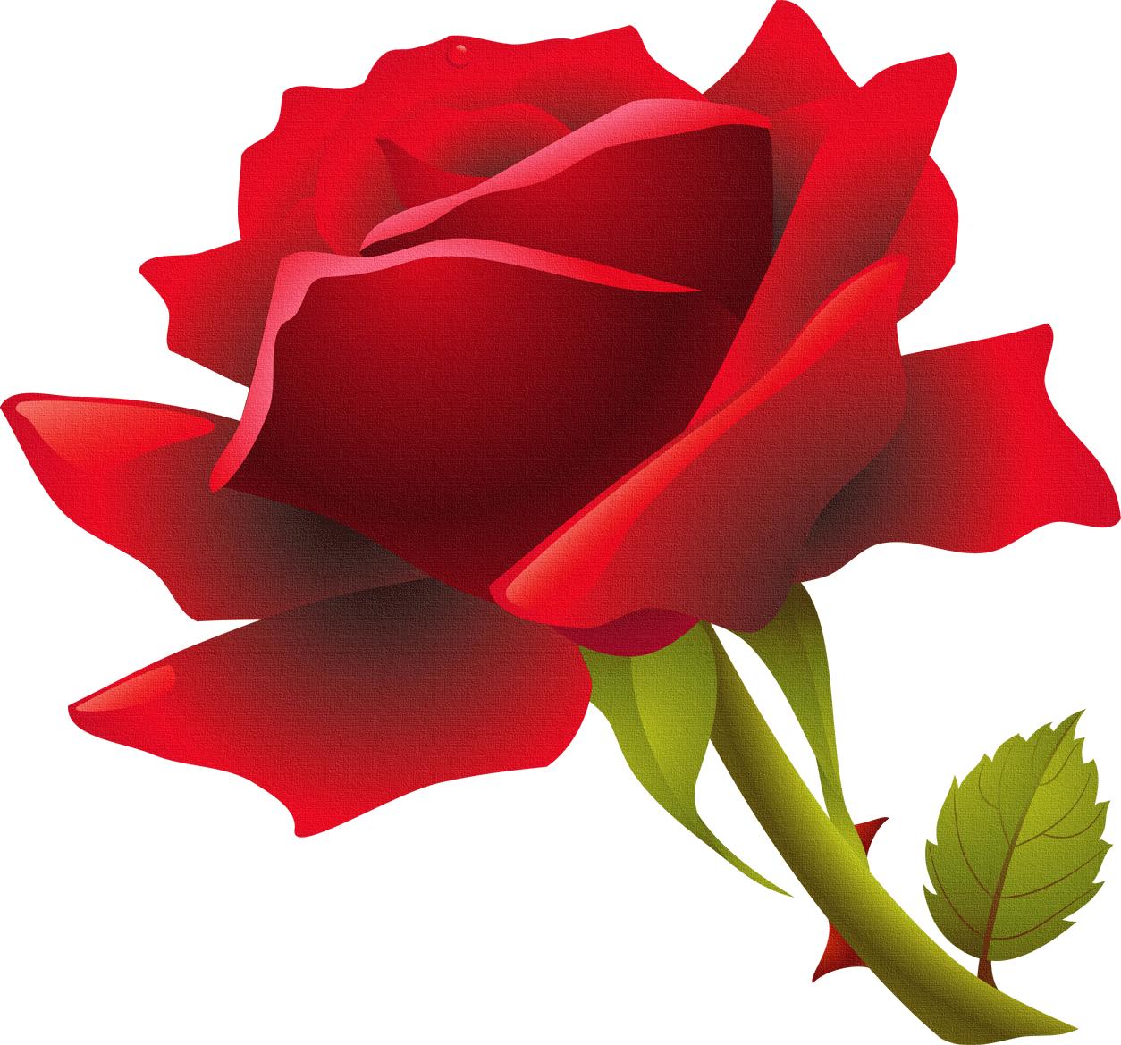 バラの画像 p1_7