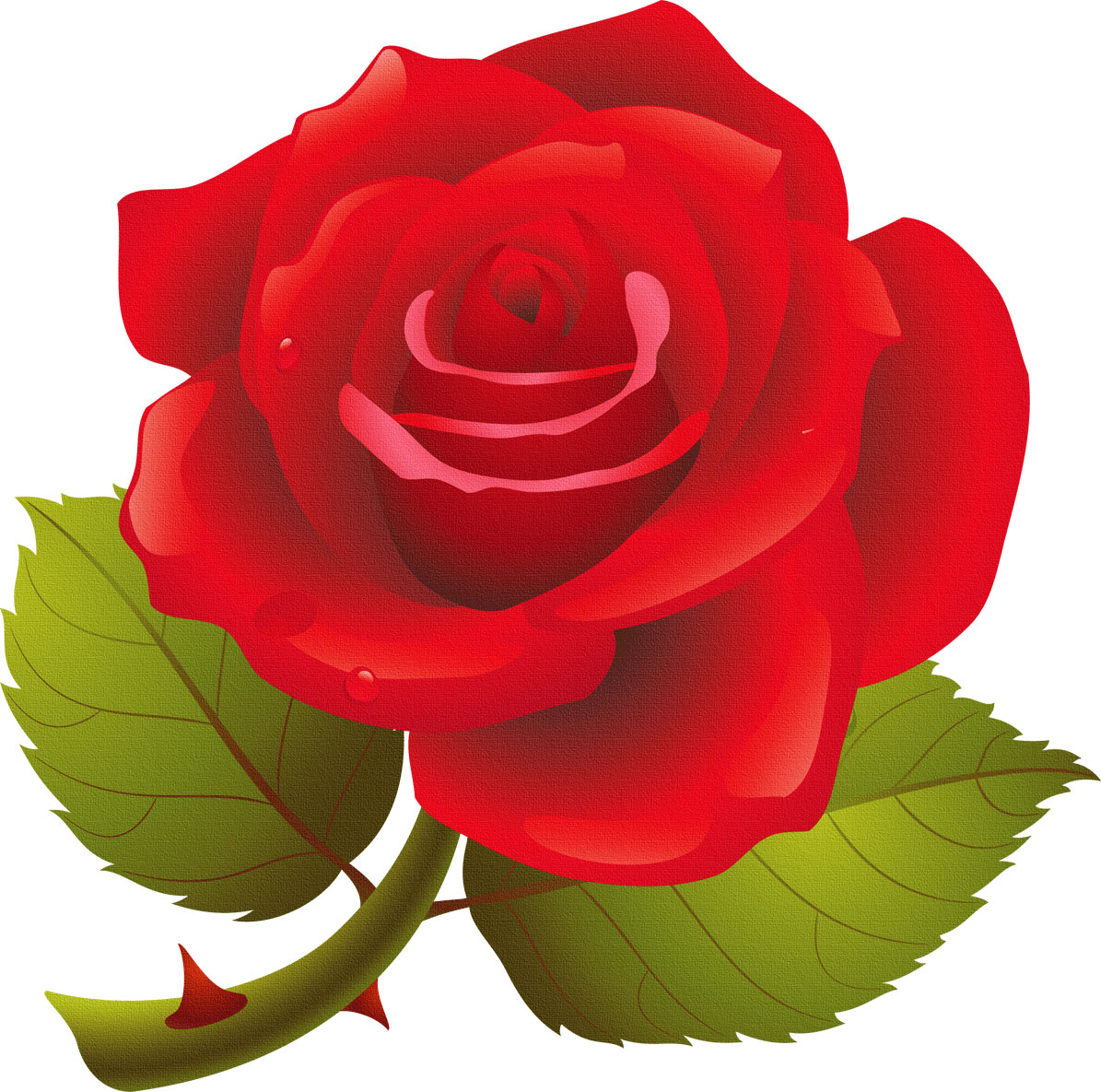 Бумажной свадьбой, картинки для детей роза на прозрачном фоне