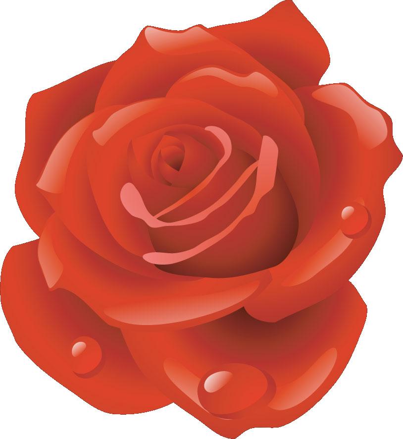 バラの画像 p1_4