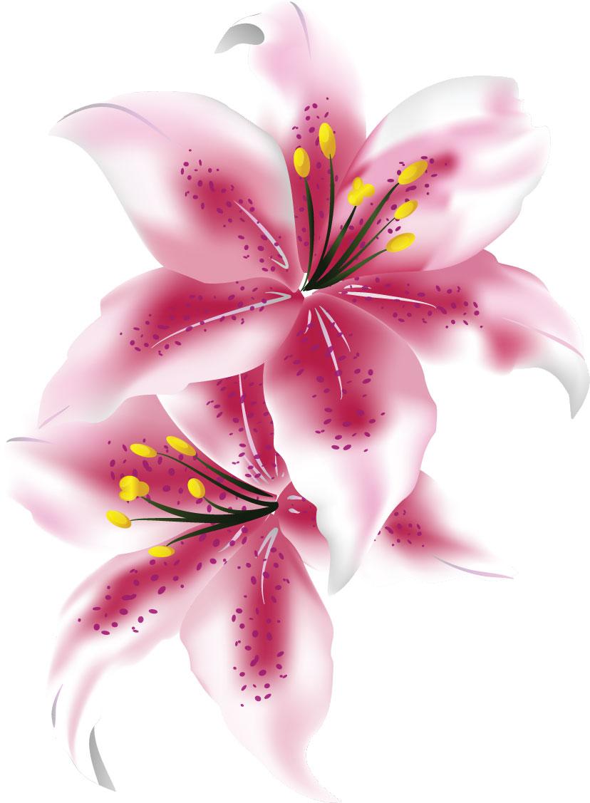 花のイラスト・画像・フリー素材 『百合(ゆり)・カサブランカ』
