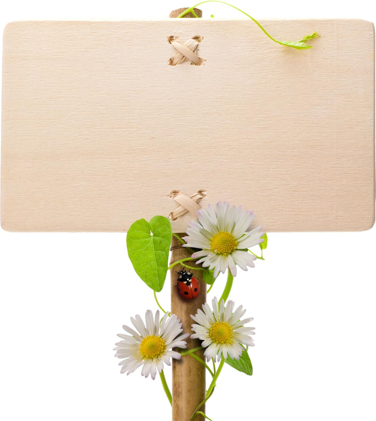花のイラストフリー素材フレーム枠no382白黄立て札てんとう虫