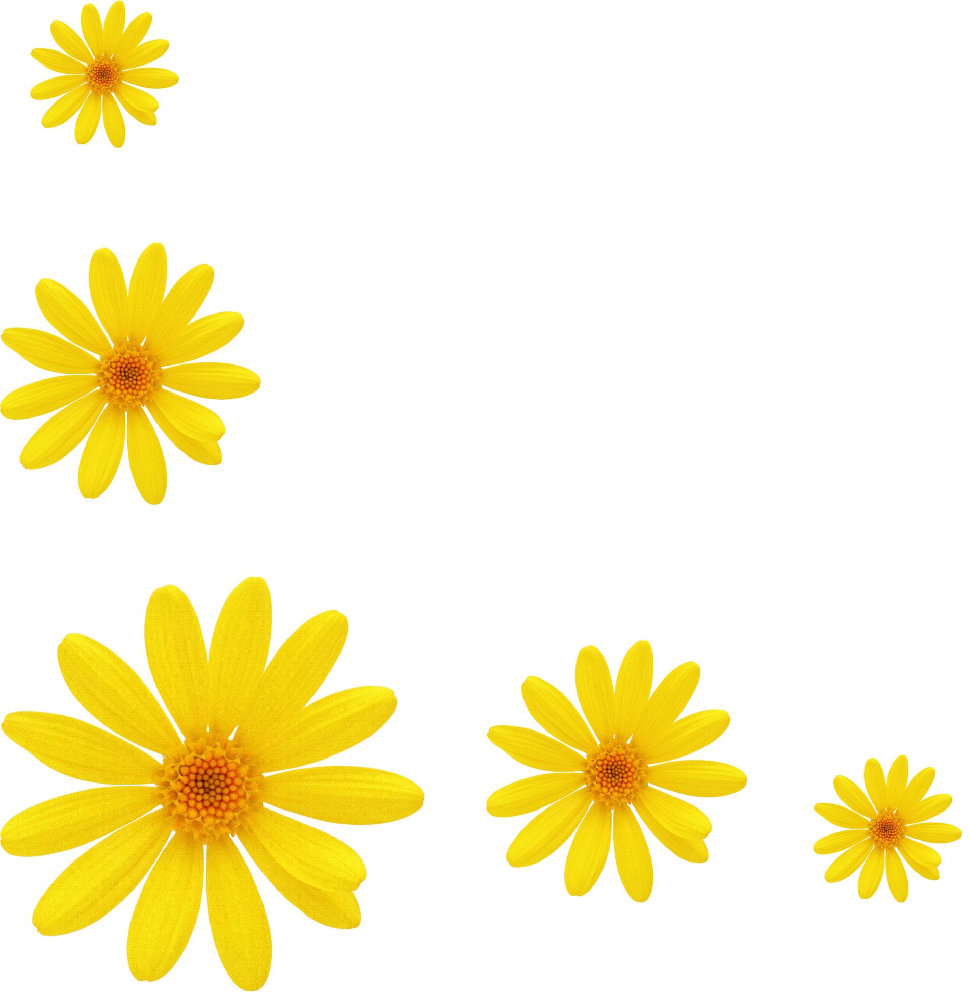 花の画像 p1_37