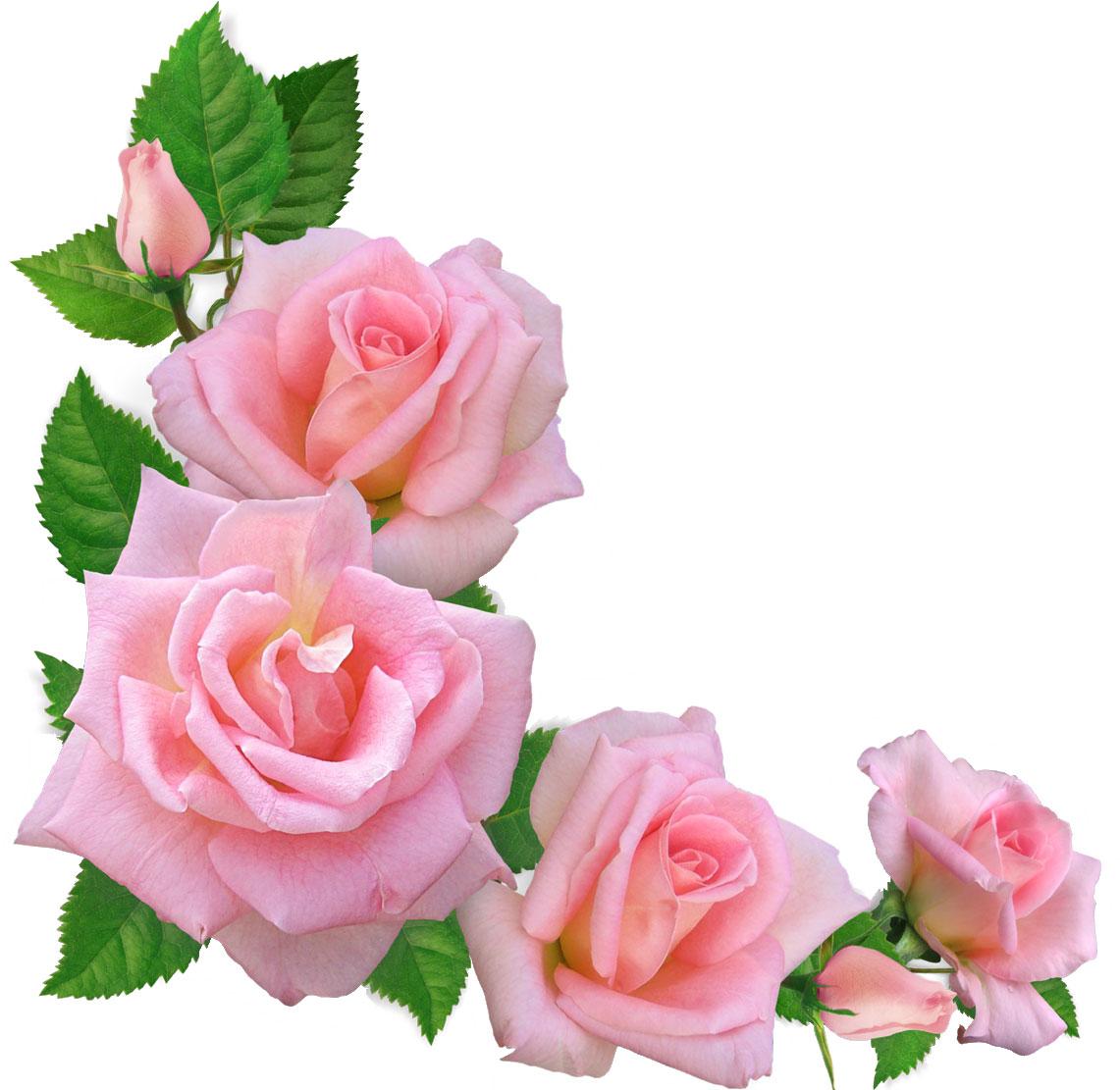 バラの画像 p1_35