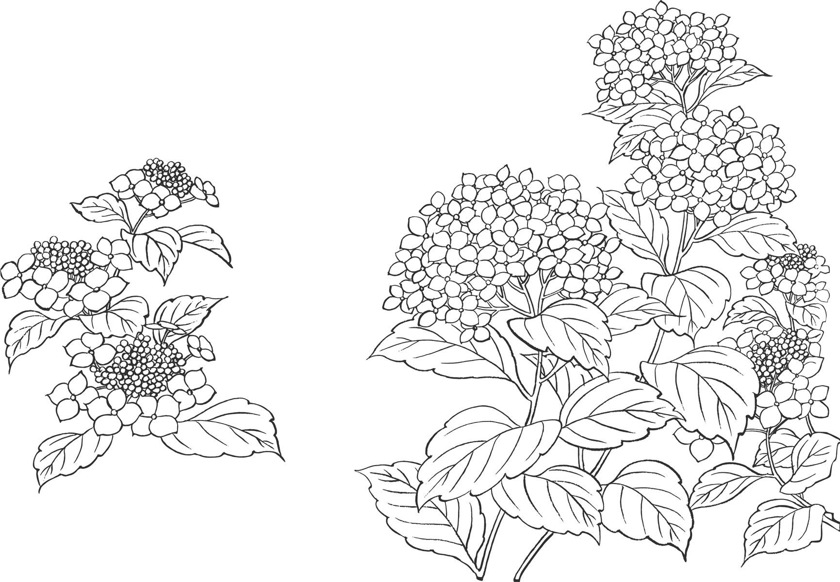 花のイラストフリー素材白黒モノクロno042白黒あじさいリアル