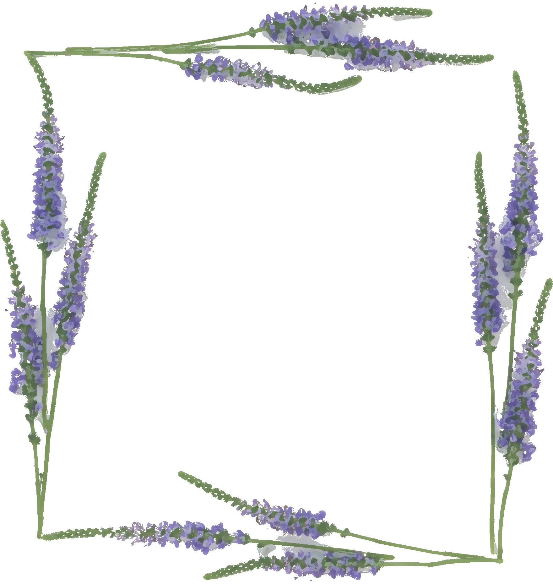 紫色の花のイラストフリー素材no335ラベンダー
