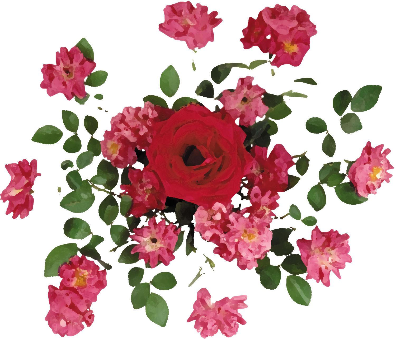 バラの画像 p1_37