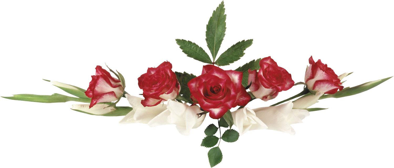 花のライン線イラスト-バラ・赤白
