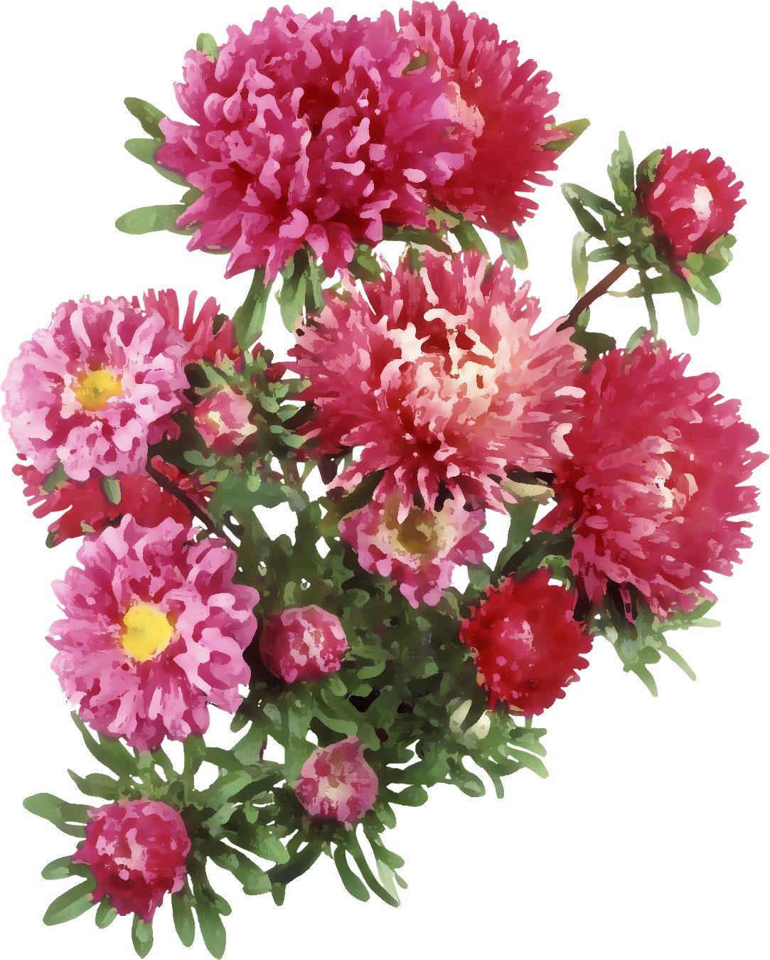 Переливающаяся красота клумбы непрерывного цветения