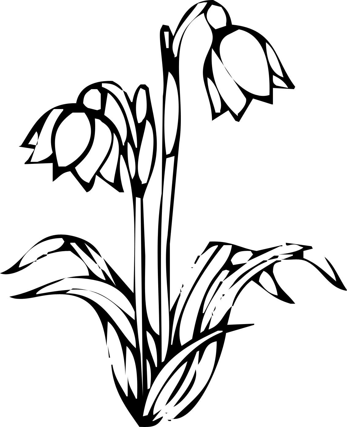 リアルな花のイラスト フリー素材 白黒 モノクロno 2129 白黒 切り絵風