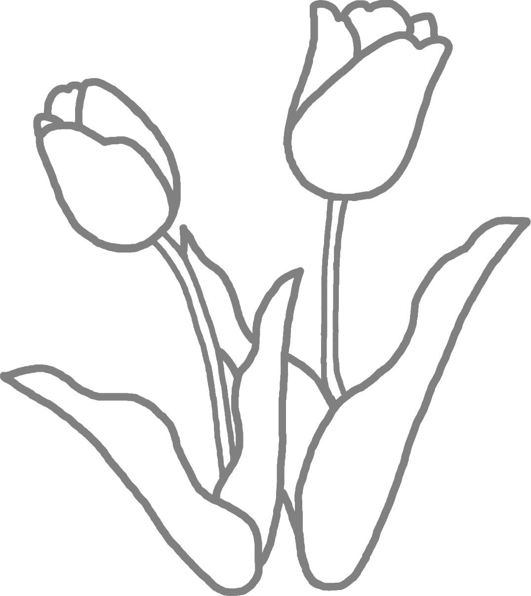 チューリップの画像 p1_2