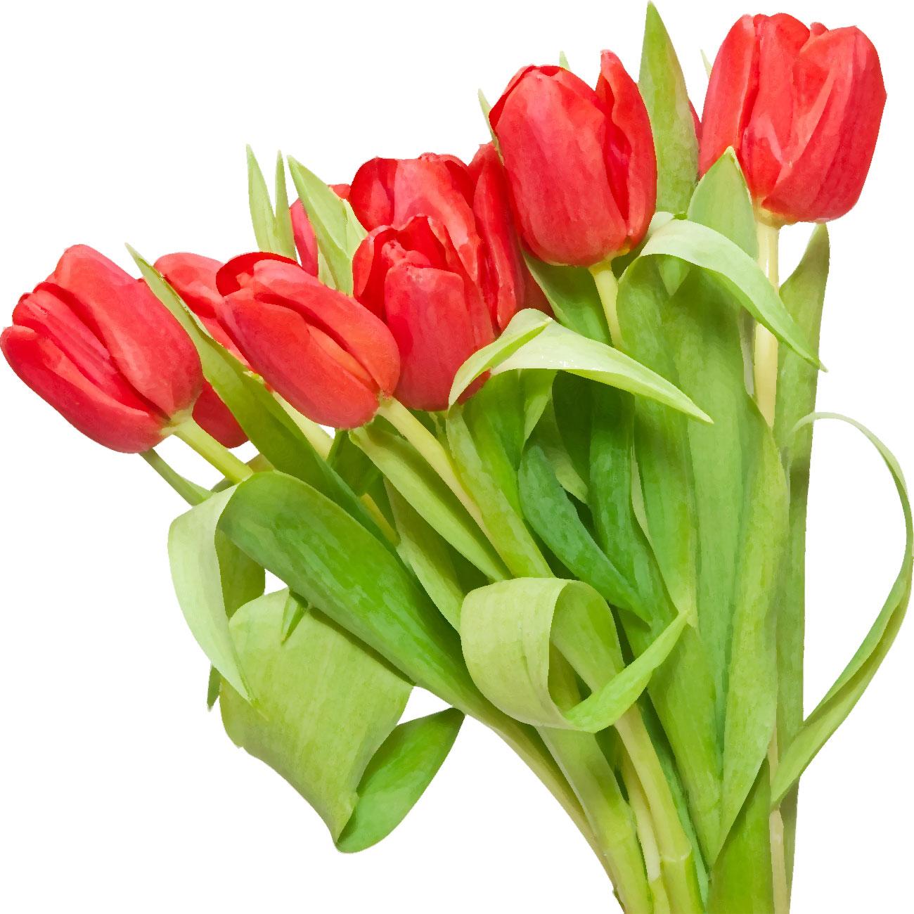 Flower5313i
