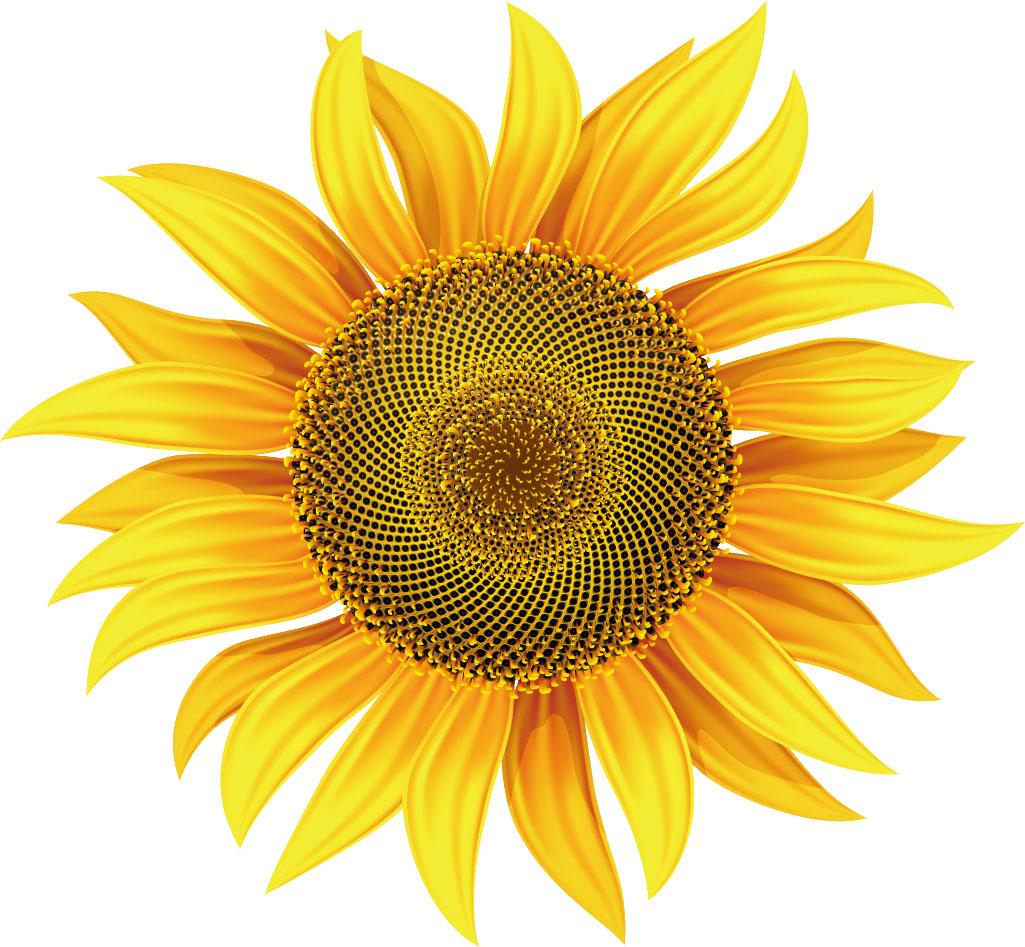 フリー素材_花画像サンプル,向日葵・黄色