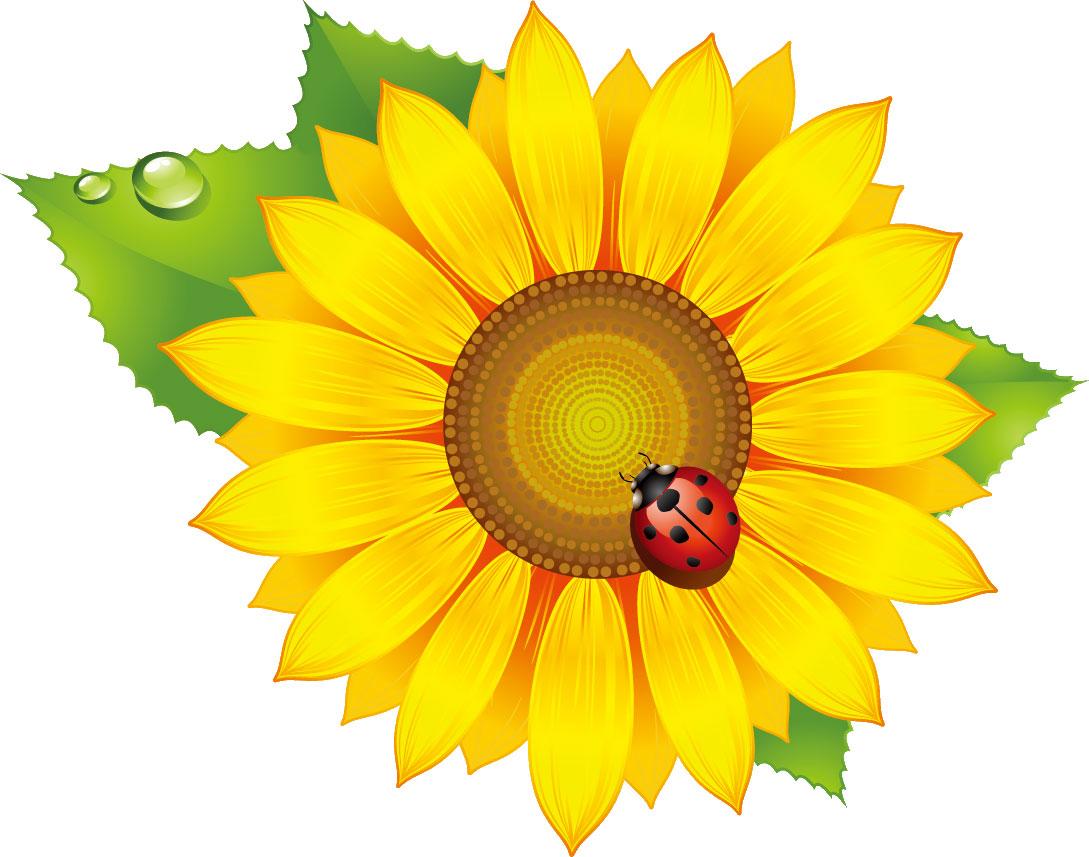 花の無料イラスト素材,向日葵・葉・水滴