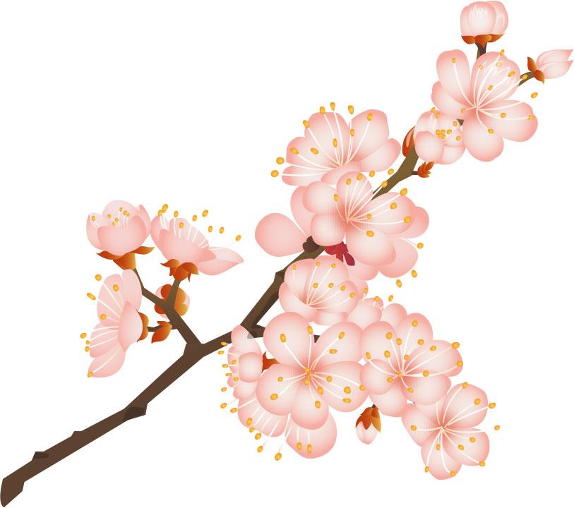 画像サンプル-桜の花とつぼみ