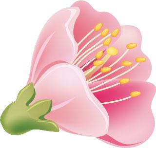 画像サンプル-さくらの花・ピンク