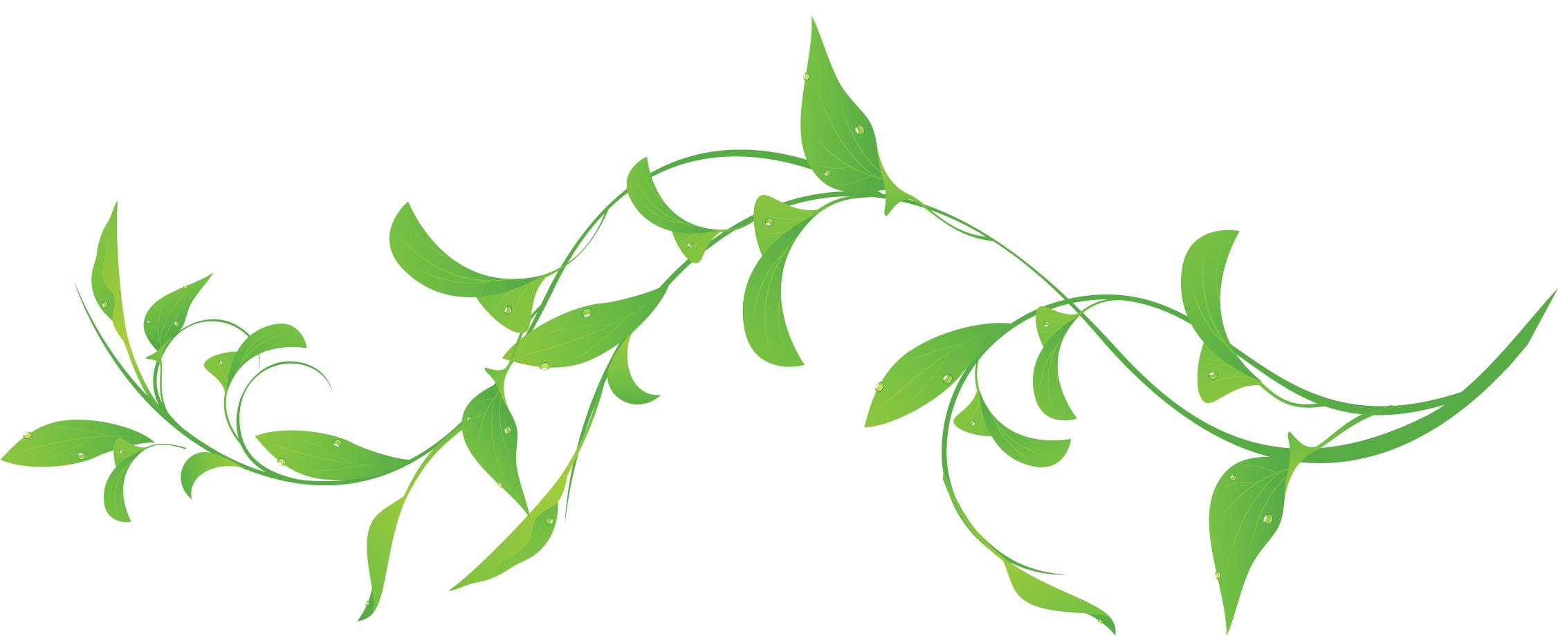 葉っぱ草木のイラストフリー素材フレーム枠no074緑葉水滴